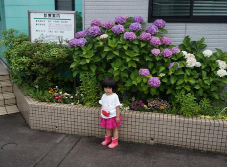花が咲きました。