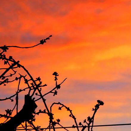 Sunset, Photograph 3.
