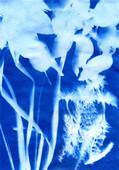 Garden Cyanotype (2020).