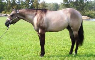 Beezer as a Yearling