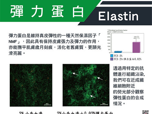 彈力蛋白-Elastin