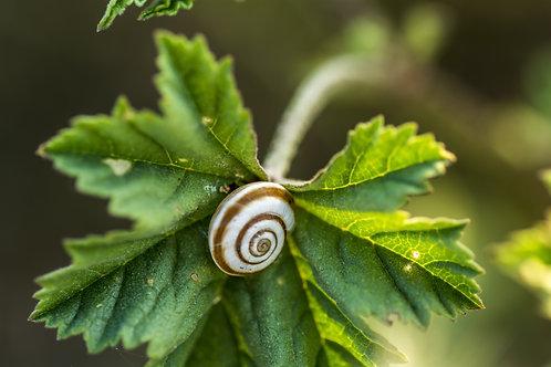 蝸牛萃取-Snail extract