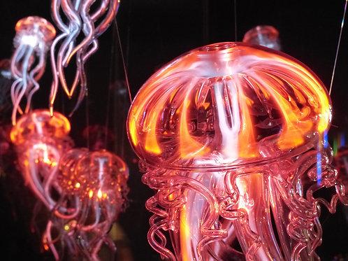 水母-Jellyfisht