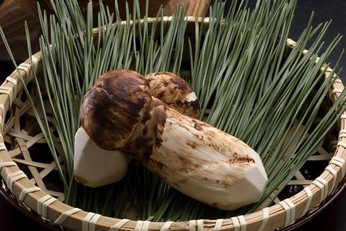 日本松茸菇- Japanese pine mushroom