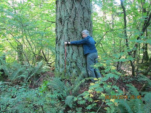 Largest Tree - IMG_0509.JPG