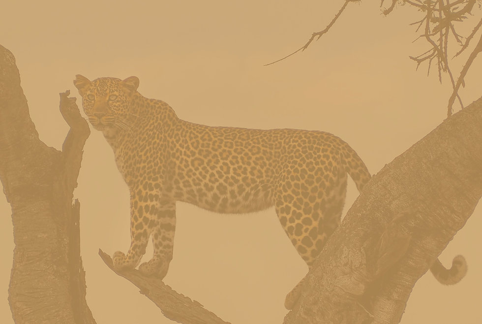 leopard on top of tree during daytime_edited_edited.jpg