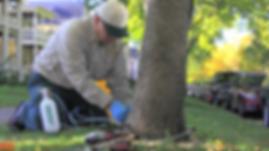 Tree Maintenance, Tree Health, Tree Remo