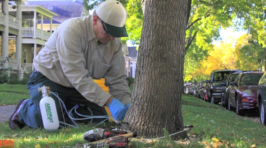 Tree Maintenance, Tree Health, Tree Remo