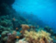 Diving in the Reef_edited.jpg