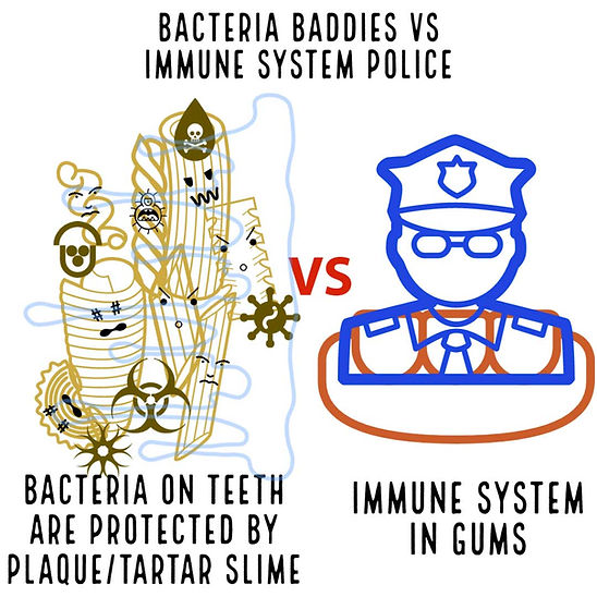 Immune System and Bacteria