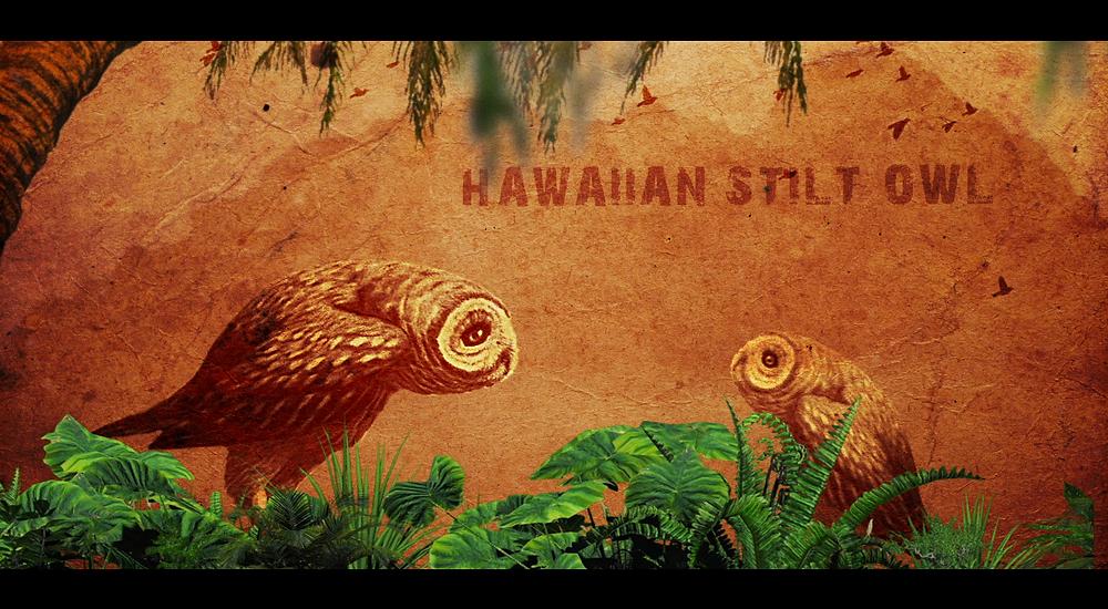 hawaii film production, hawaii videography, hawaii videographer, honolulu videographer, oahu films,