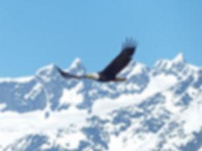 bald-eagle-mountains.jpg
