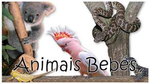 Animais Bebés - Série