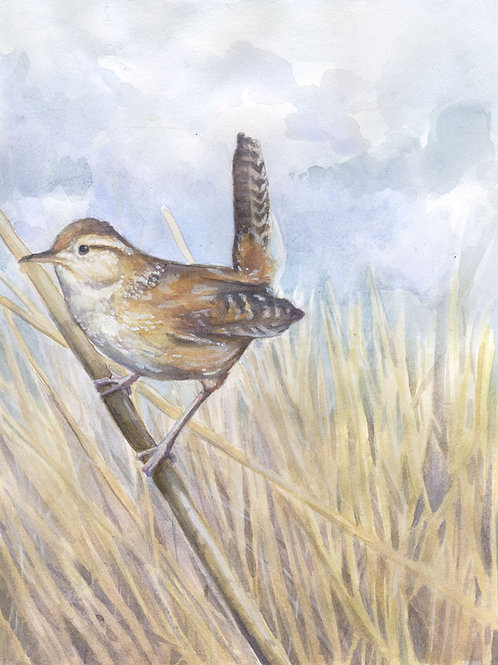 Original Marsh Wren Watercolor