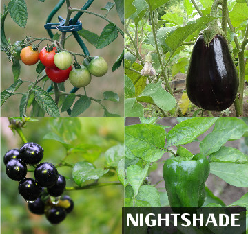 Top 5 Poisonous Plants to Watch Out for This Spring