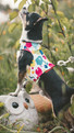 Tutti Frutti YAP Wrap Engineered Harness for Dogs by YAP USA