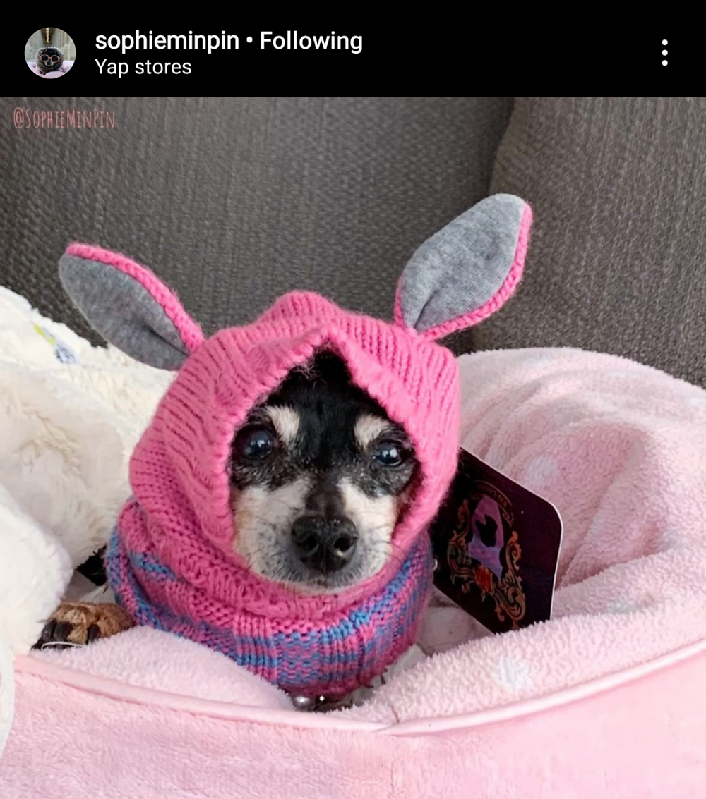 A photo of small cute black dog in a neck warmer that looks like bunny ears.