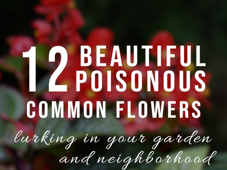 GARDEN FLOWERS POISONOUS TO DOGS