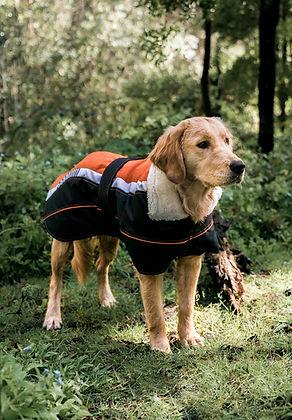 Golden Retriever in Orange Vitesse Coat engineered insulated coat for dogs
