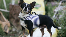 Breton Stripe YAP Wrap Engineered Harness for Dogs by YAP USA