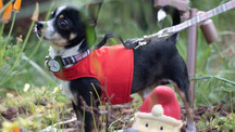 Red YAP Wrap Engineered Harness for Dogs by YAP USA