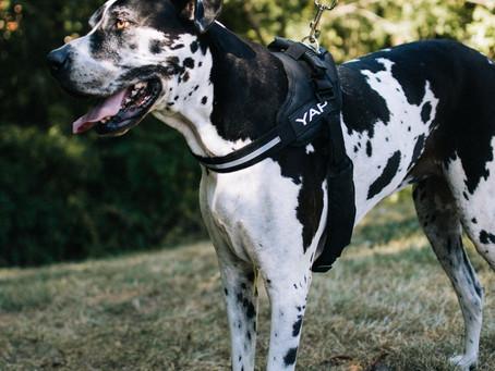 Walking Your Dog during the Coronavirus Pandemic