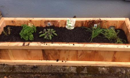 Herbs - the gateway drug?