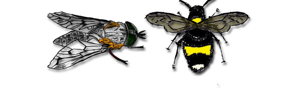 bee & fly gallery image.jpg