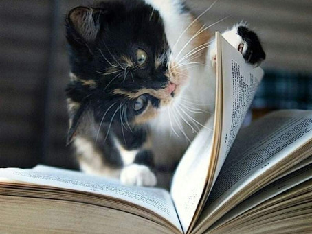 "Reading ""A Study in Catnip"" by A. Cat Doyle..."