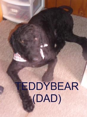 TeddyBear 2 031720.JPG