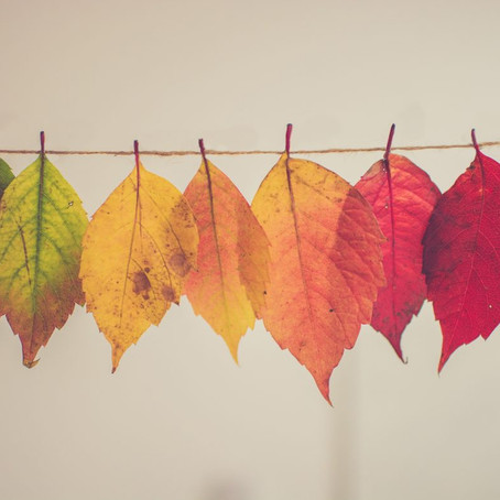 6 TCM Tips to Surviving the Seasonal Changes
