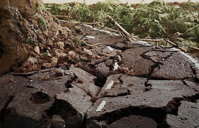 Eno Earthquake.jpg