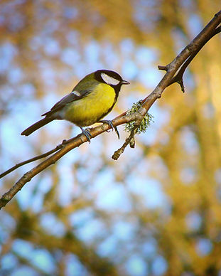 bird-Z224H8F (1).jpg