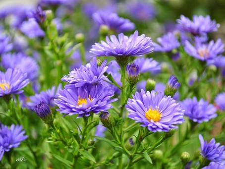 Sống ảo tại vườn hoa Vũng Tàu