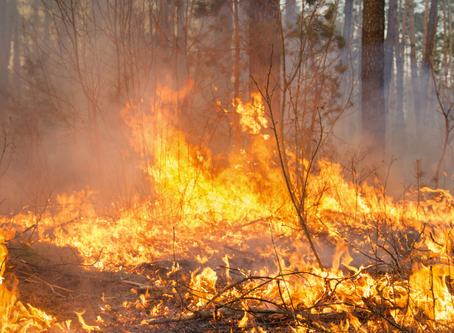Forest Fires: The Good, The Bad and Why They're Sometimes Necessary.