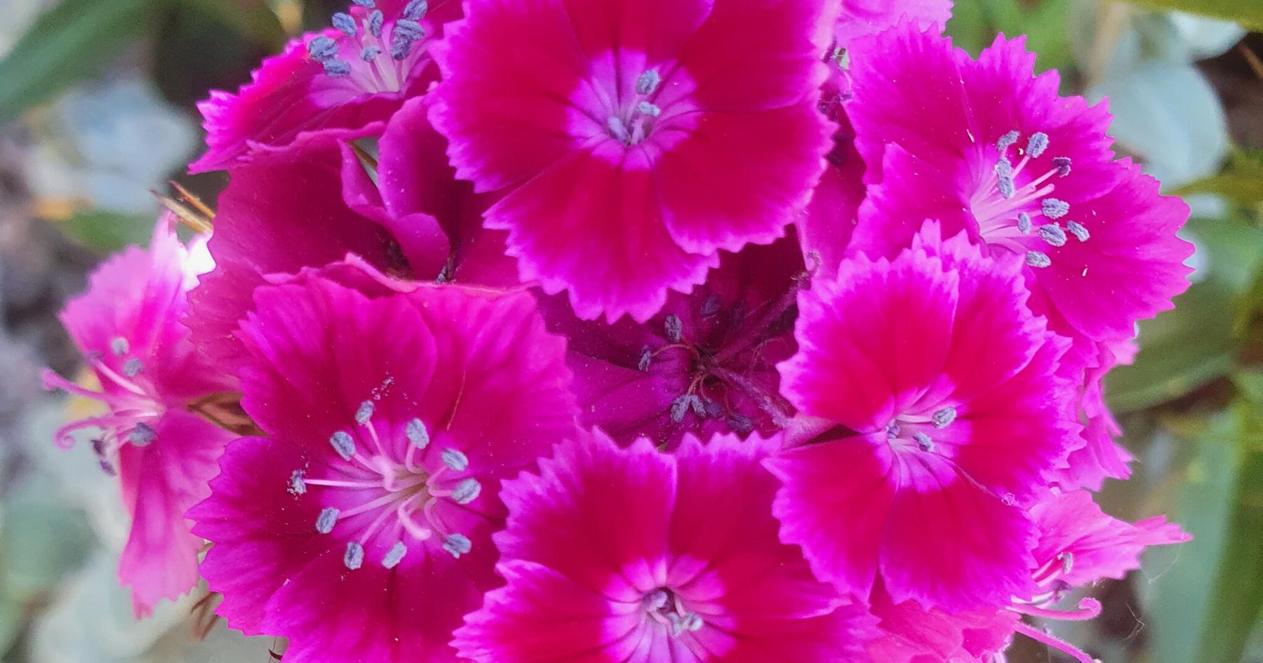 web pink copy.png