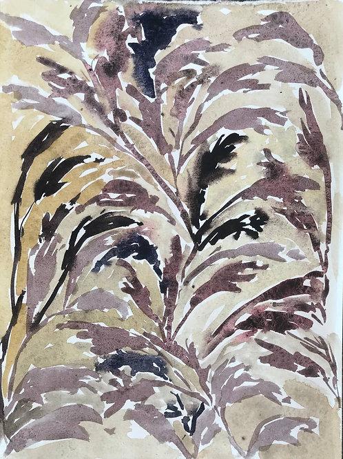 Cimicifuga Ramosa by Beatrice Hasell-McCosh