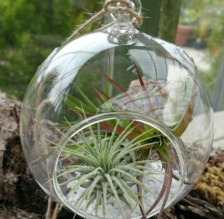 APA4 Glass Globe Large contemporary.jpg