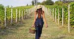 vineyard2 (1).jpg