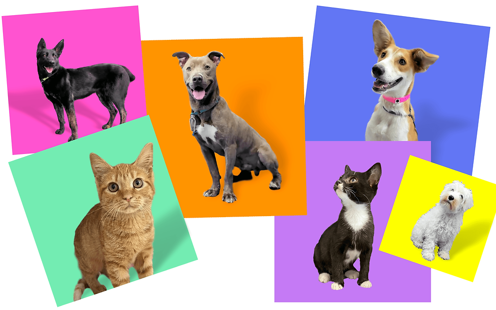 Optimized-dogs-and-cats.png