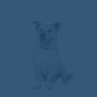 Optimized-TestimonialDog2 (1) (1).png
