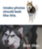 Ourmission-intakephotos2.png