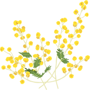 mimosa1.png