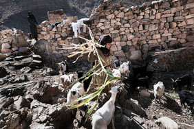 Yemen Post arabic spring_12.JPG