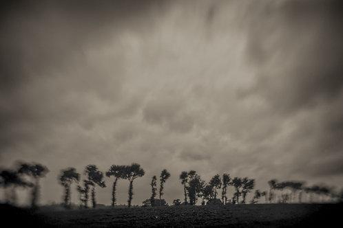 Landscapes 20