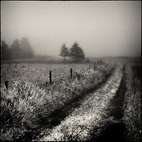 Landscapes 11