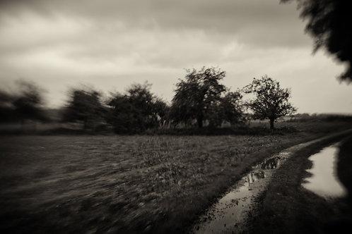 Landscapes 15
