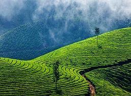 Kolukkumalai-Tea-Estate-Munnar-1.jpg