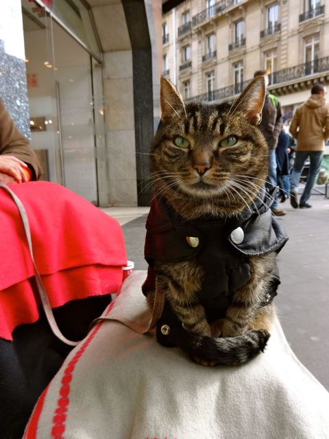 Homeless woman and cat