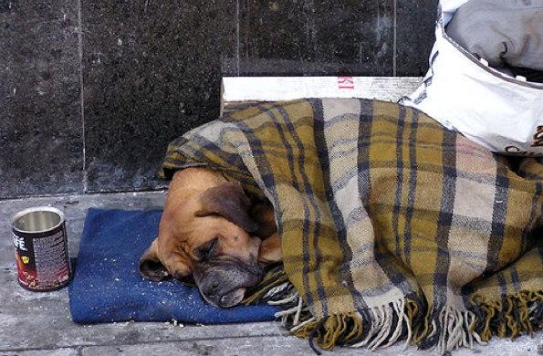 Homeless Boxer